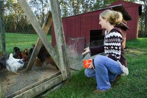 Vad är orsakerna till Stress hos kycklingar?