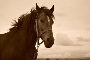 Hår analys för hästar