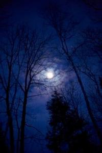 Hur man plantera en köksträdgård av faser av månen i zon 5