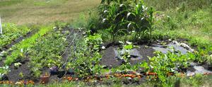Hur man plantera en lättodlad grönsak trädgård