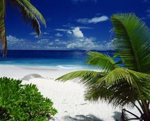 Magnesium Sulfate för palmer