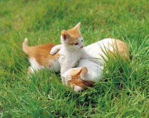 Hur till: utomhus PVC-struktur för katter