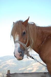 Hur man behandlar en häst med torr hud