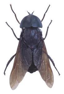 Hur att fånga flugor & gula jackor i en flaska fälla
