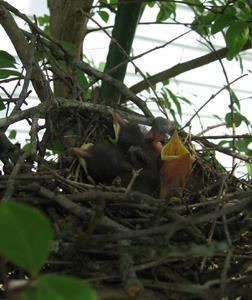 Vad man ska mata övergivna fågelungar