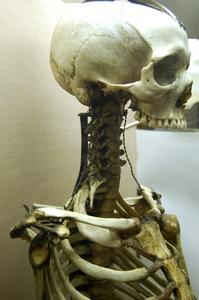 Vad är funktioner av skelettet?