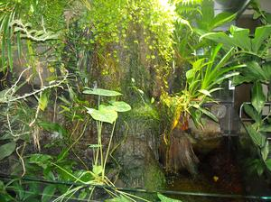 Olika typer av icke-blommande växter