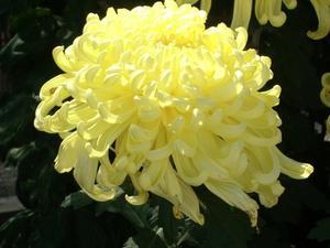 Blommor som symboliserar döden
