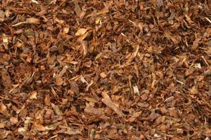 Kan användas färsk ceder som marktäckning?