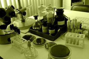 DNA-analys i brottslighet identifiering