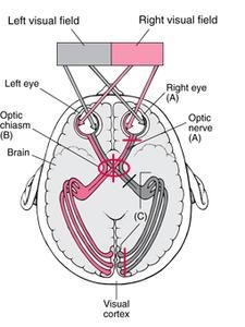 Ögonsymptom nerv skador