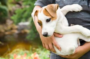 Hemlagad mat för hundar med urinvägarna problem