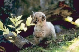 Hur att fånga vilda kattungar