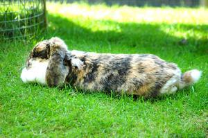 Hur man gör en kaninbur