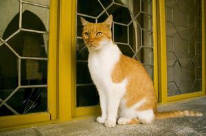 Kalium brist i kattdjur