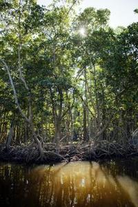 Lista över tio utrotningshotade växter i Palawan