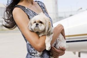 Vad är orsakerna till darrande hos hundar?
