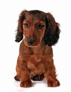 Hemgjord Detangler för långhåriga hundar