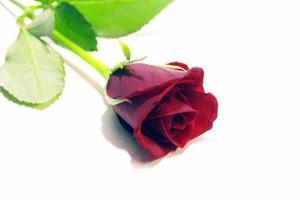 Hur att Linda Long-rosor som en Florist