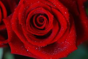 Tabell mittpunkten idéer med röda rosor