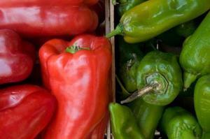 Hur man odlar paprika plantor från frön