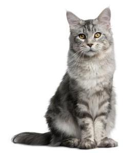 Hur man skickar ett husdjur katt