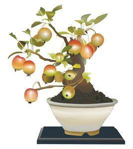 Hur djupt är rötterna på en dvärg fruktträd?
