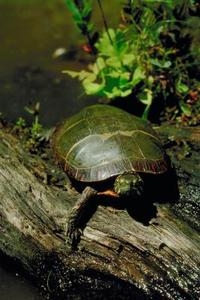 Sköldpadda formad kaka idéer