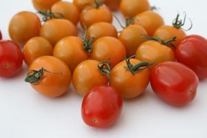Hur mycket Miracle-Gro ska jag använda för tomater?