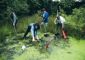 Miljömässiga volontär möjligheter
