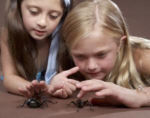 De bästa sätten att bli av med gemensamma hus spindlar som är säkra för husdjur