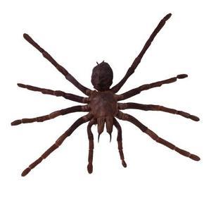 Hur man identifierar håriga bruna spindlar