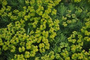 Varför växter sprider sina frön?