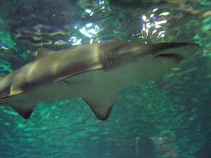 Shark hantverk för barn