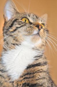 Symtomen vid exponering för ammoniak i katt-urin