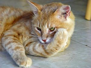 katt spyr skum