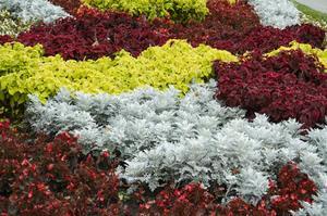 Plantering Guide för våren utplanteringsväxter