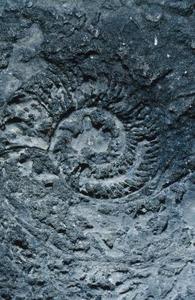 Vilka olika typer av fossil finns det?