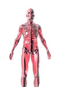 Anatomi & fysiologi i det reproduktiva systemet