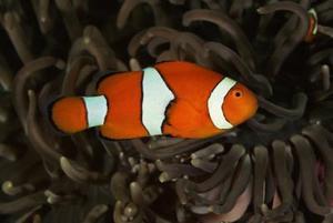 Barnens skolprojekt på korallrev