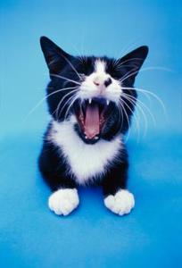Hur vet jag om min katts tänder besvärar honom?