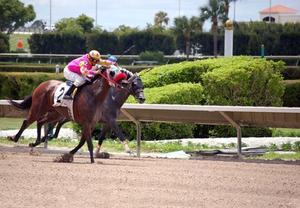 Horse Racing handikapps förklarade