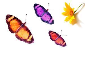 Typer av lila fjärilar