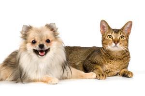 Heartworms hos hundar & katter