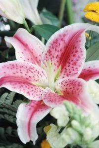 Bröllop höjdpunkten idéer med hjälp av stargazer liljor
