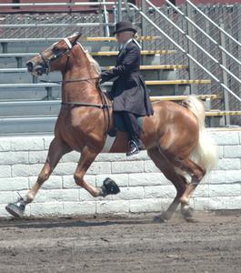 Genetiska sjukdomar av Tennessee Walking hästar