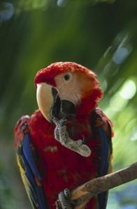 Hudproblem i papegojor