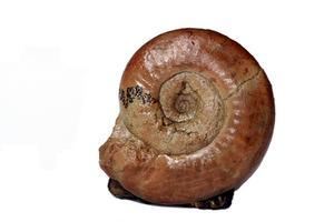 Hur att hitta fossiler i South Alabama