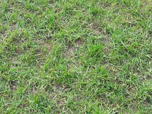 Den bästa tiden att reseed en gräsmatta