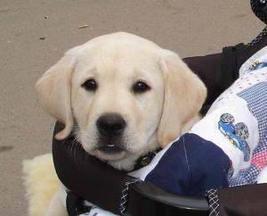 Cykelkärra & Barnvagnar för hundar